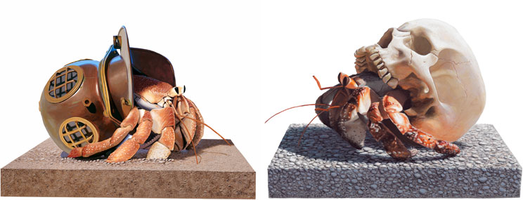 """brenda miller hermit crab essay The shared space between reader and writer: i often teach classes on the form of the """"hermit crab"""" essay brenda miller directs the mfa in creative."""